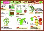 howtogrou_greenpepper_planter