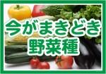 今がまきどき野菜種OL