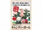 A4POP_kyandiboru