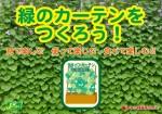 緑のカーテン120104-2OL