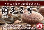 POP菌王2号A4(種菌で決まる)141029OL