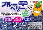 ブルーベリー3種(ぐんまちゃん)141028OL