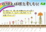 kyukon fukasa_pop_01
