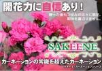 サキーネA4POP150108OL