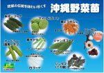 a4pop_okinawa9shu_yoko170928ol