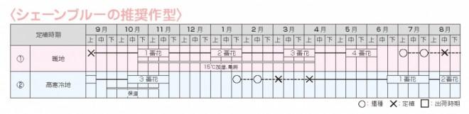 オキシペタルム シェーンブルー 作型表