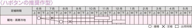 ハボタン作型表